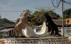 A Jaguar and Puma greeted us at Puerto Maldanado.