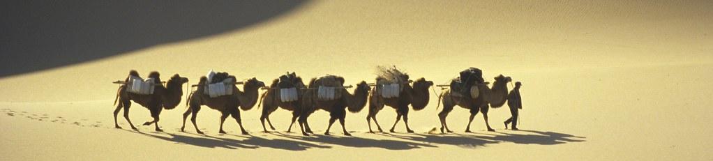 Kameltrekking inmitten der Wüste Gobi. Foto: Bruno Baumann.