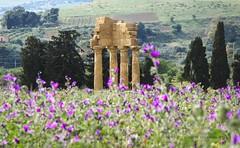 Tempio dei Dioscuri...