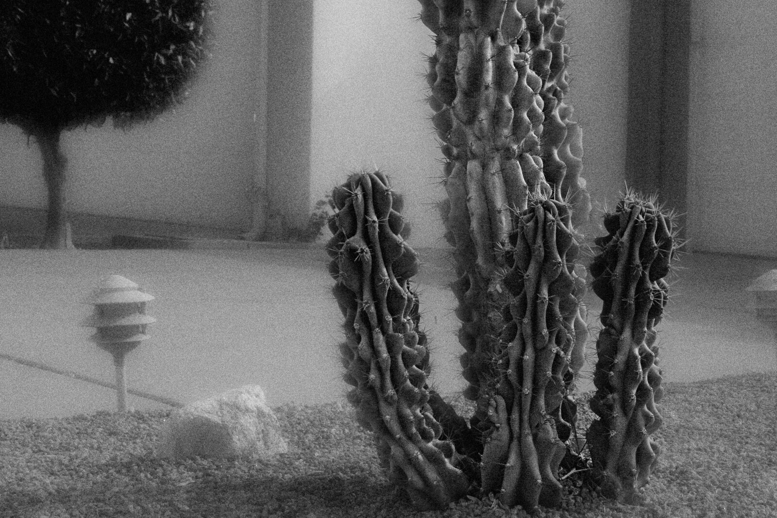 Portrait of Landscape Cactus and Night Light in B&W, 2015