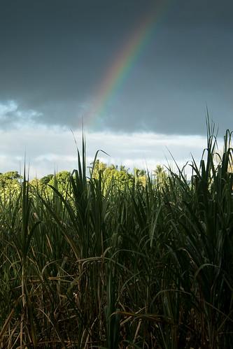 fiji canon eos mba rainbow vitilevu ba 1785mm 1785 efs1785mmf456isusm sugarcane 100canon fijiislands efs1785 apsc 7d2 unlimitedphotos 7dmarkii canon7dmarkii rarawai