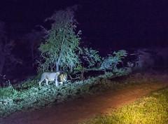 Y1A1711 Olarro, Kenya