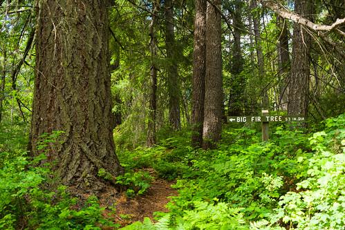 statepark trees tree sign forest us washington unitedstates goldendale firtree washingtonstateparks brooksmemorialstatepark