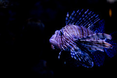 Aquarium of the Smokies-65