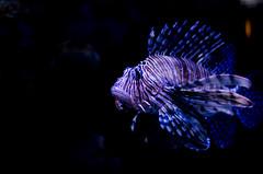 Aquarium of the Smokies-65