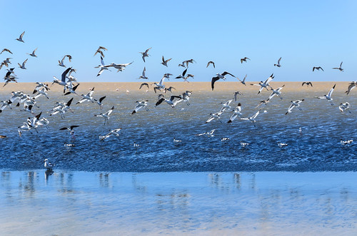 Birds of the lagoon of Walvis Bay, Namibia