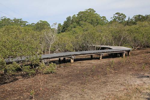 North Pindimar Mangroves on Cycleway Boardwalk, Tea Gardens, NSW 17.4.2015