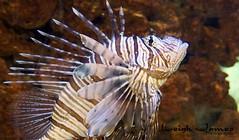 Tropical fish 02 CoZ 16052015