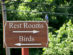 How about a bird using a sign as a rest room?