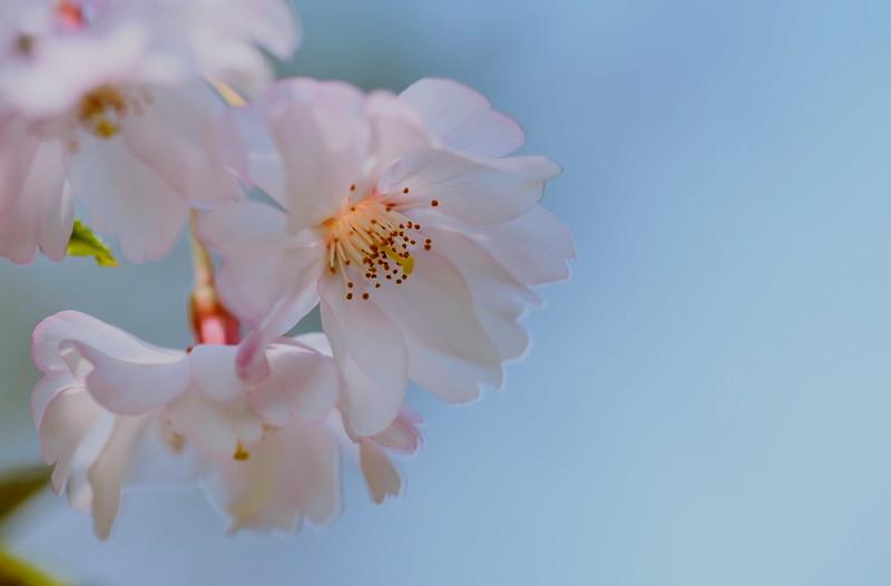 flower 322