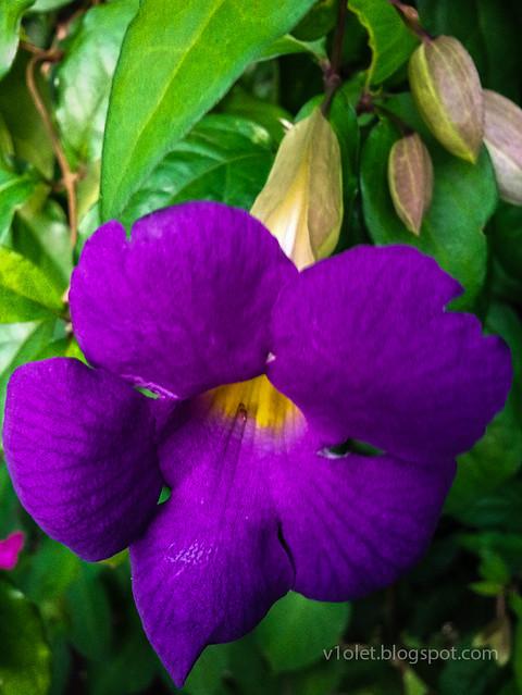 Jimmers kembang ungu1-174405rw