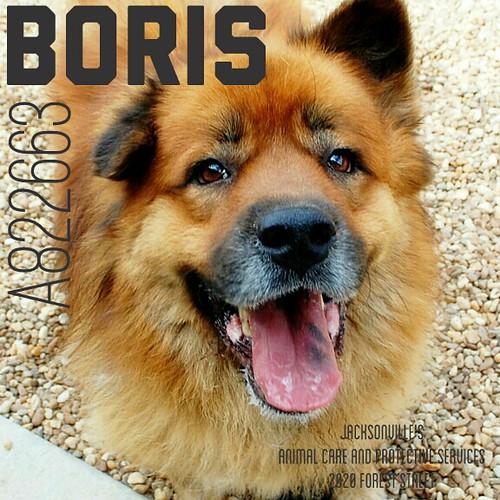 Boris_A822663