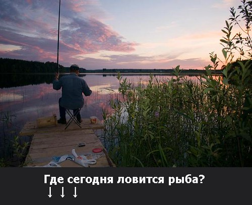 Где сегодня ловится рыба?