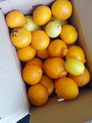 clementine, citrus, orange, valencia orange, yellow, vegetarian food, meyer lemon, kumquat, yuzu, produce, fruit, food, tangelo, sweet lemon, bitter orange, mandarin orange,