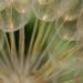 Ombrelles de fées by mamzellelouison