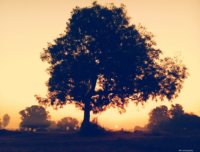 In early morning, caught this beautiful sunrise shot with tree