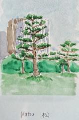 Matsu tree