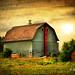 Tin Barn # 106 by Mike Linnihan