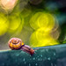After the Rain (Bokeh Battle 4/5) by Bokehsüchtig (back, but catching up slowly)