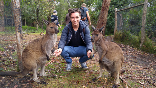 giel-and-kangaroos