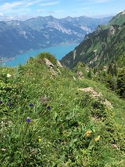 Brienzersee from the Tuba