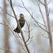 Nesting by tmo222
