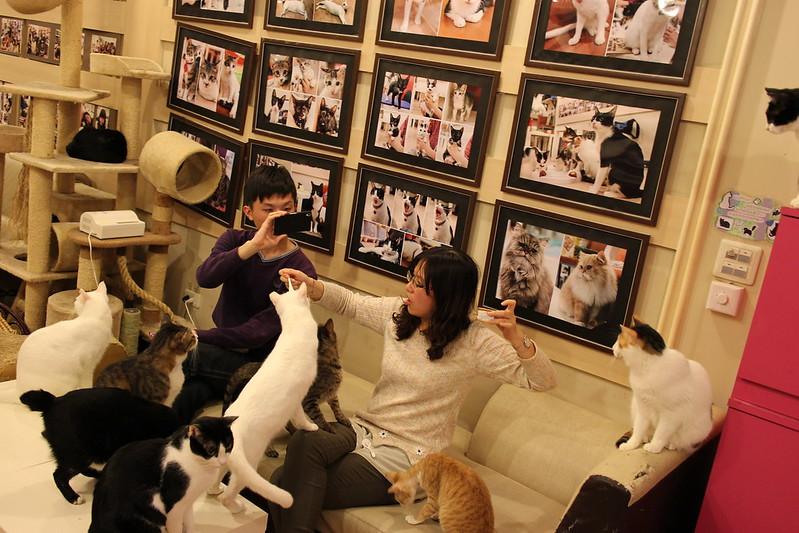 【新北市-捷運頂溪站】貓藝家,好多貓咪聚在一起的貓窩
