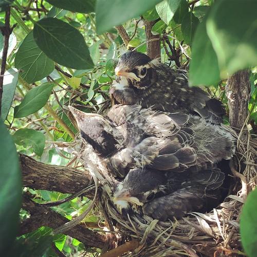 Birdies are getting so big!