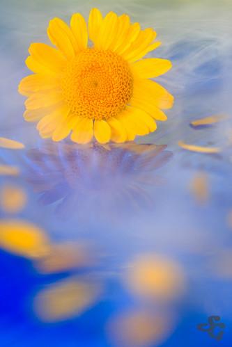 etiquettesdemotsclésimportées fleur macrophotographie reflet flore flower glacecarbonique fog brume sunrise macro