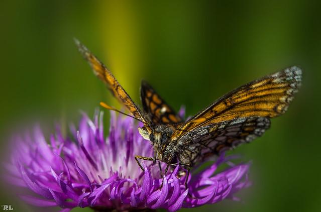 Butterfly...PartIV [explore Jul 20, 2016]