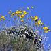 Desert Spring Blossoms -- Catalina, AZ [Lou Feltz]