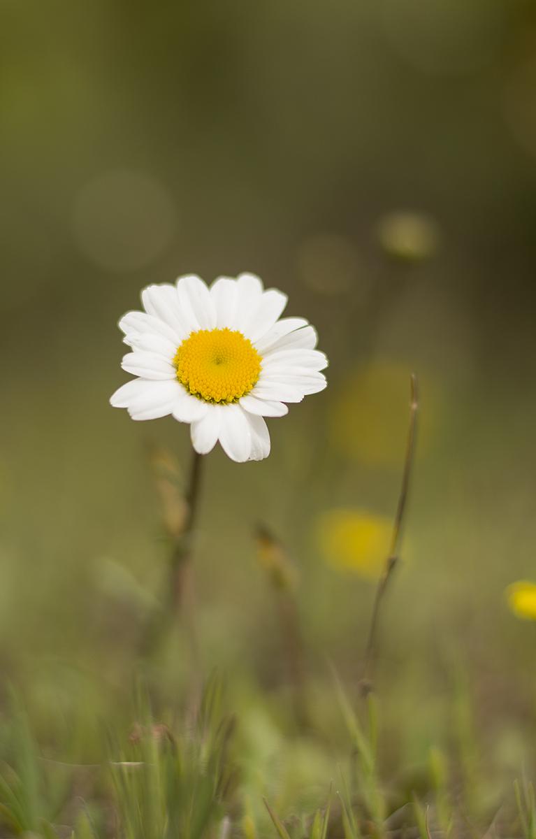 "6.- Fauna y flora - MAY ""Vellorita"""