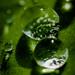 The advantage of having rain. by Jean Latteur