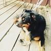 #cooperdog