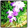 Triple #Iris