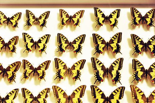 Jean Henri Fabre Insekten Insektenforscher Ausstellung Botanischer Garten Bochum Scans und Fotos Brigitte Stolle