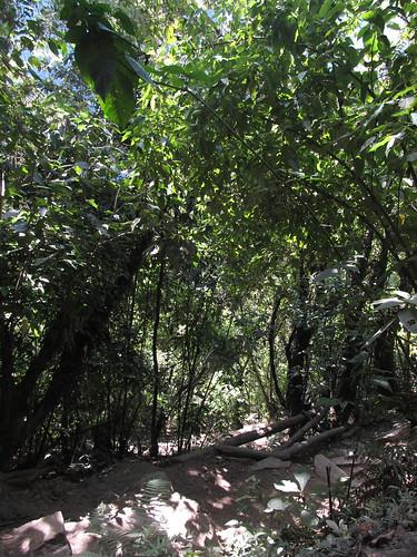 Machu Picchu: et on redescend les 1700 marches !