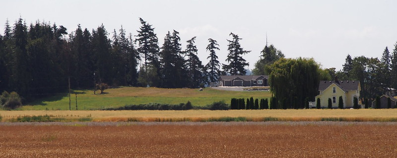 Fir Island Farmlands: I was hoping to get some nice photos with my telephoto lens, but ended up with the distortion from the hot, rising air instead.