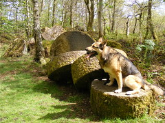 Pupz on millstones