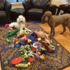 """What do you mean, """"pick up our toys?"""""""
