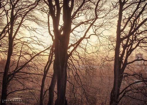 trees light sunset sunlight scotland unitedkingdom glasgow sony gb cathkinbraes a99 sonyalpha andyhough slta99 andyhoughphotography