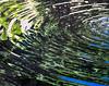 Botanic Gardnes-021