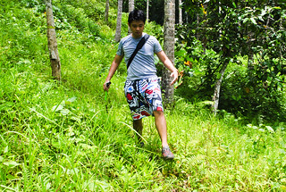 Nikko Trail