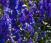 Botanic Gardnes-027
