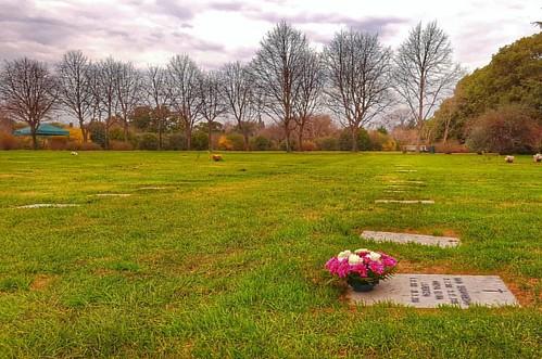 #remembering #yesterday #latergram #flowers #trees #invierno #winter #recuerdos