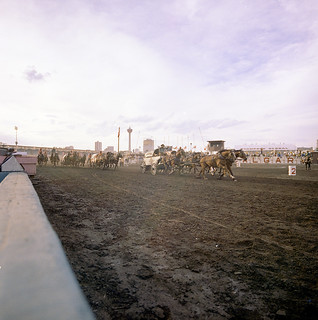 Chuckwagon race at the Calgary Stampede