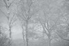 Deeside Mist