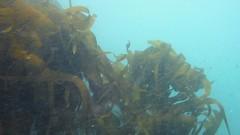 sunlight(0.0), shipwreck(0.0), coral reef(1.0), seaweed(1.0), sea(1.0), marine biology(1.0), underwater(1.0), reef(1.0), kelp(1.0),
