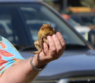 Thommos Toad, Kununurra Agricultural Show