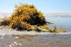 How are algae helpful to people?